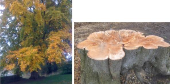 tree_cut1
